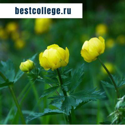 Колледжи и техникумы Удмуртии